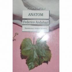 ANDAHAZI ANATOM